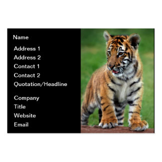 A cute baby tiger large business card