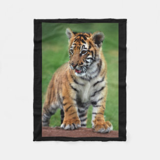 A cute baby tiger fleece blanket