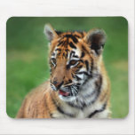 A cute baby tiger mouse pads