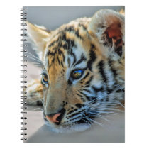 A cute baby tiger notebook