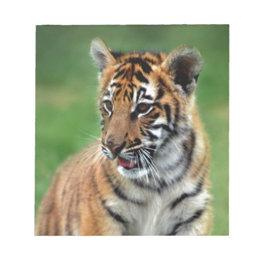 A cute baby tiger notepad