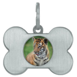 A cute baby tiger pet name tag