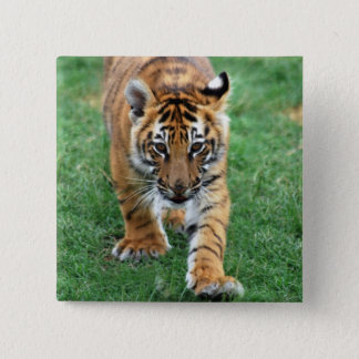 A cute baby tiger pinback button
