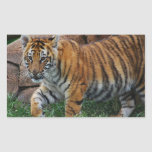 A cute baby tiger rectangle stickers