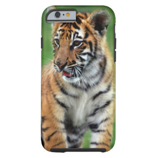A cute baby tiger tough iPhone 6 case