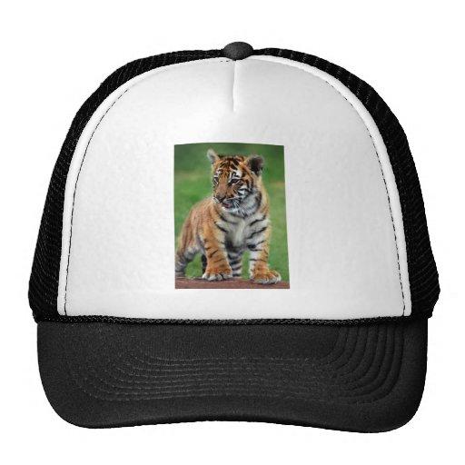 A cute baby tiger trucker hat