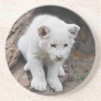 A cute baby white lion drink coasters