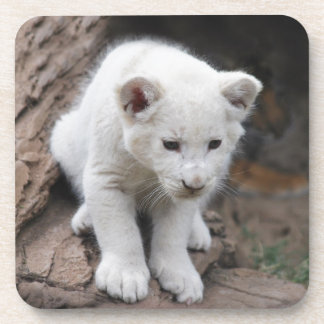 A cute baby white lion drink coaster