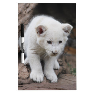 A cute baby white lion Dry-Erase whiteboards