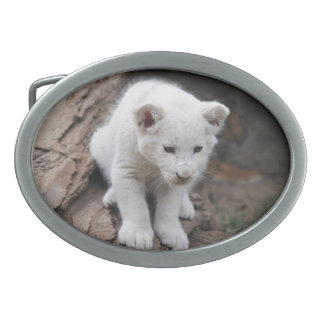 A cute baby white lion oval belt buckles