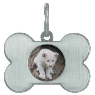 A cute baby white lion pet name tag