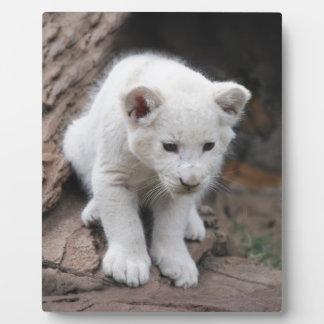 A cute baby white lion plaque