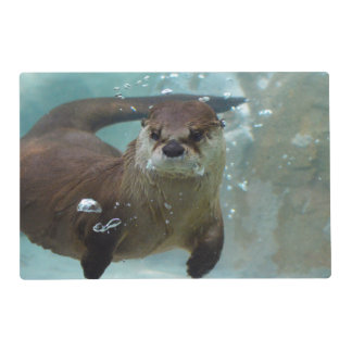A cute Brown otter swimming in a clear blue pool Placemat