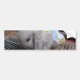 A Cute Bunny Rabbit in a Dress Bumper Sticker