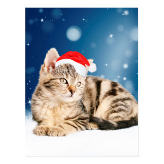 A Cute Cat wearing red Santa hat Christmas Snow Postcard
