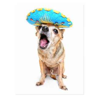 A Cute Chihuahua In A Halloween Costume Postcards