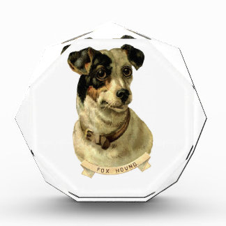 A cute Fox Hound dog Posing Acrylic Award