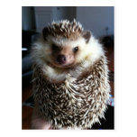 A cute hedgehog postcard