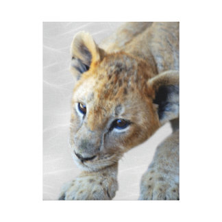 A cute lion cub canvas print