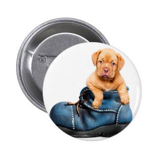 A cute little brown puppy posing over a blue shoe button