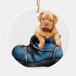 A cute little brown puppy posing over a blue shoe ceramic ornament