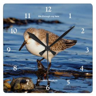 A Cute Little Wandering Sanderling Square Wall Clock