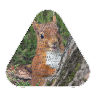 A cute red squirrel bluetooth speaker
