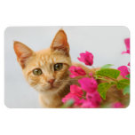 A cute red tabby kitten is watching you. rectangular photo magnet