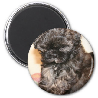 A Cute Shih Tzu Pup makes this product adorable Magnet