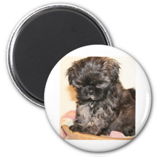 A Cute Shih Tzu Pup makes this product adorable Refrigerator Magnet