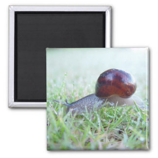 A Cute Snail In Dewy Grass, Refrigerator Magnet