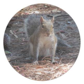 A cute Squirrel Plates