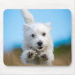 A Cute West Highland Terrier Puppy Running Mouse Pad