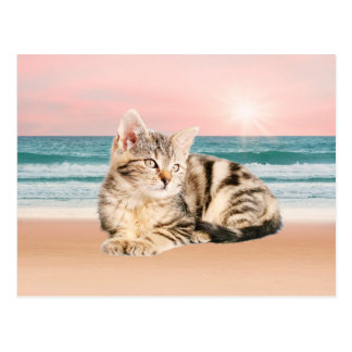 A Cuter Striped Cat Sitting on Beach with sunset Postcard