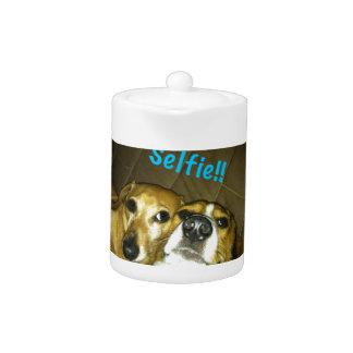 A dachshund and a beagle taking a selfie