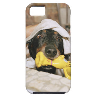 A dachshund being bathed. iPhone SE/5/5s case