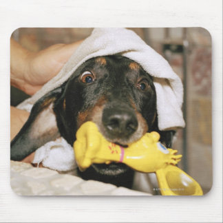 A dachshund being bathed. mouse pad
