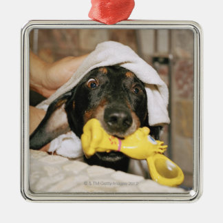 A dachshund being bathed. square metal christmas ornament