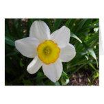 A daffodil beauty card