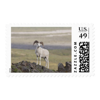 A Dall sheep ram poses on Marmot Rock Postage Stamp