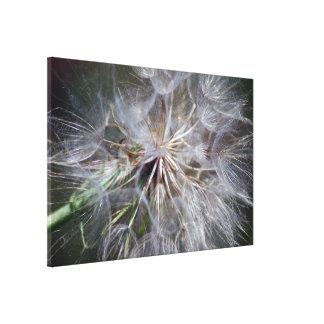 A dandelion seed macro canvas print