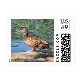 A Day at the Duck Pond Postage Stamp