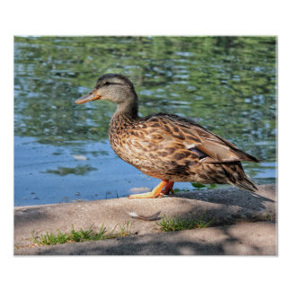 A Day at the Duck Pond Poster Print