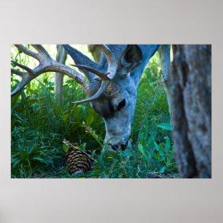 A deer grazing 1 print