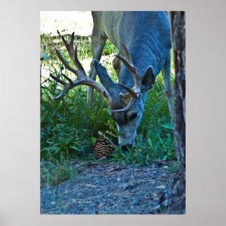 A Deer Grazing 2 print