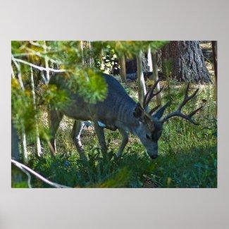 A Deer Grazing 3 print