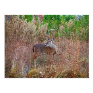 A Deer in the Tall Grass Postcard