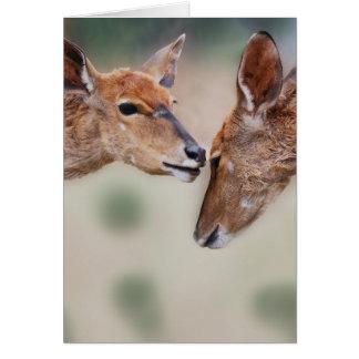 A deers best friend cards