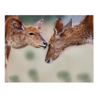 A deers best friend postcard