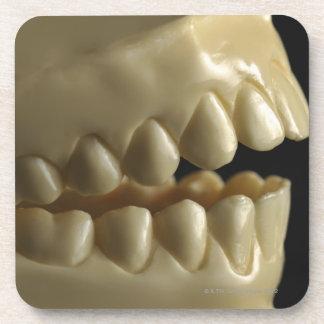 A dental model drink coaster